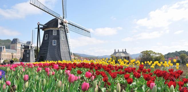 Jeżeli podatnik uzyskuje dochody w Holandii, musi je rozliczyć w Polsce.