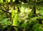 Puszcza Karpacka: Poznaj projektowany Turnicki Park Narodowy [ZDJĘCIA]