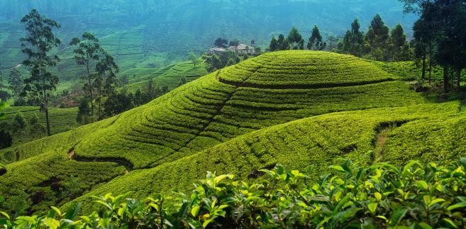 Sri Lanka – dzika przyroda, góry, plaże i legendarne miasta