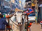 8. miejsce: Delhi. Jeden dzień pobytu w tym indyjskim mieście można zamknąć w kwocie 21.38$.