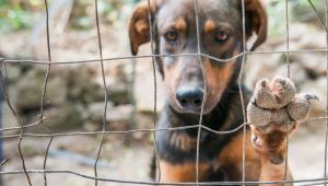 Na gminę ma zostać nałożony obowiązek identyfikacji bezdomnych psów i kotów w ciągu doby od ich wyłapania.