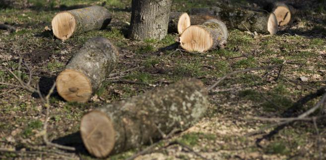 Tylko połowa kary administracyjnej za usunięcie drzewa może być darowana