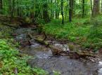 <strong>Ciśniańsko-Wetliński Park Krajobrazowy</strong> <br></br> Lasy Ciśniańsko-Wetlińskiego Park Krajobrazowy z niedźwiedziami, rysiami i żbikami oraz wieloma rezerwatami przyrody (np. Sine Wiry z unikatową roślinnością oraz dolina rzeki Wetlinki) to kolejny powód, by wypocząć w bieszczadzkim zakamarku Polski. W pobliżu wsi Duszatyn osobliwą atrakcją są Jeziorka Duszatyńskie, które powstały ponad sto lat temu na skutek zatamowania odpłuwu potoku przez osuwisko. By znaleźć się w tych okolicach trzeba wybrać czerwony szlak pieszy: Komańcza – Prełuki – Duszatyn – Jeziorka Duszatyńskie – Chryszczata. <br></br>